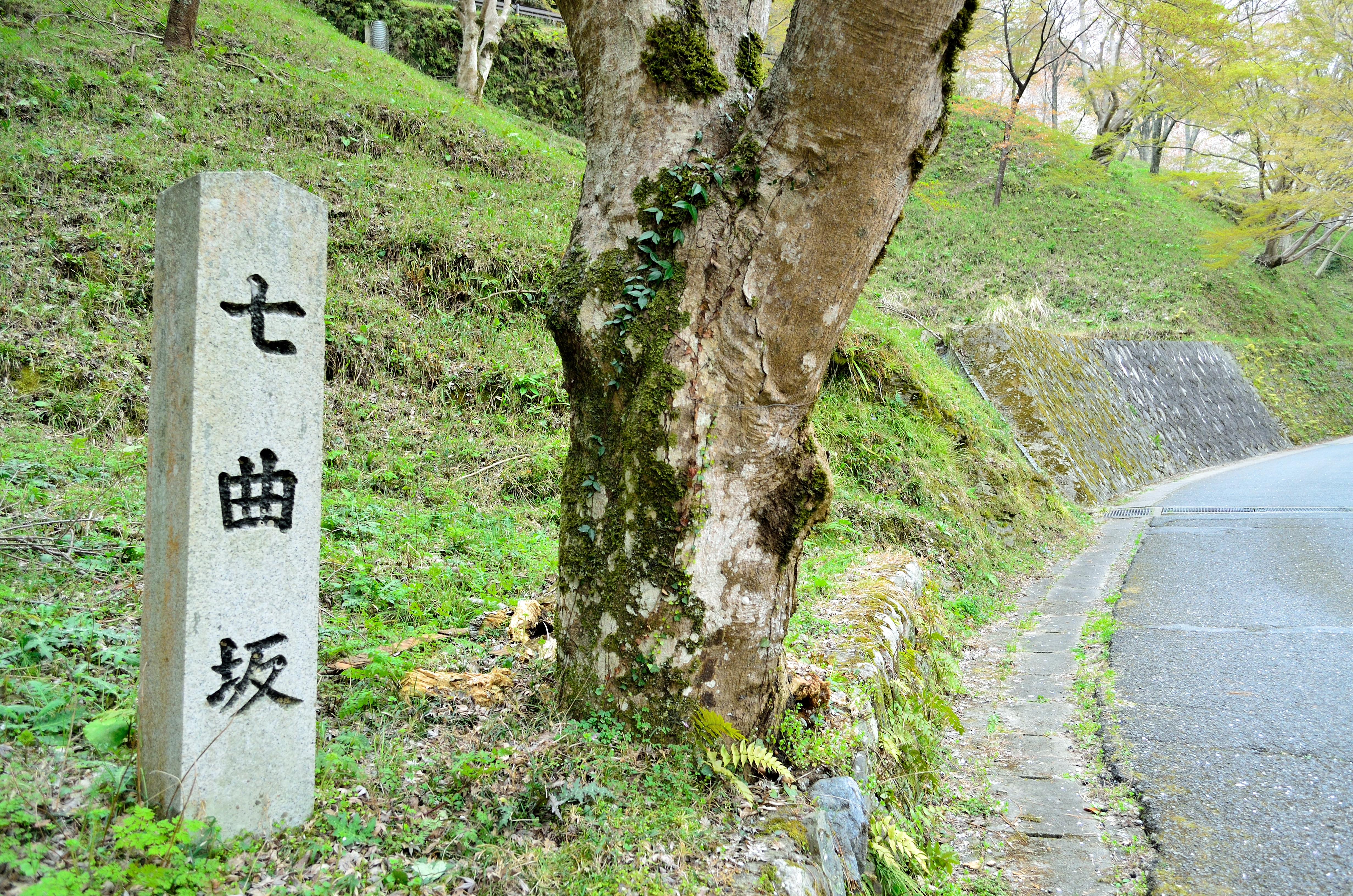 吉野山下千本 七曲坂