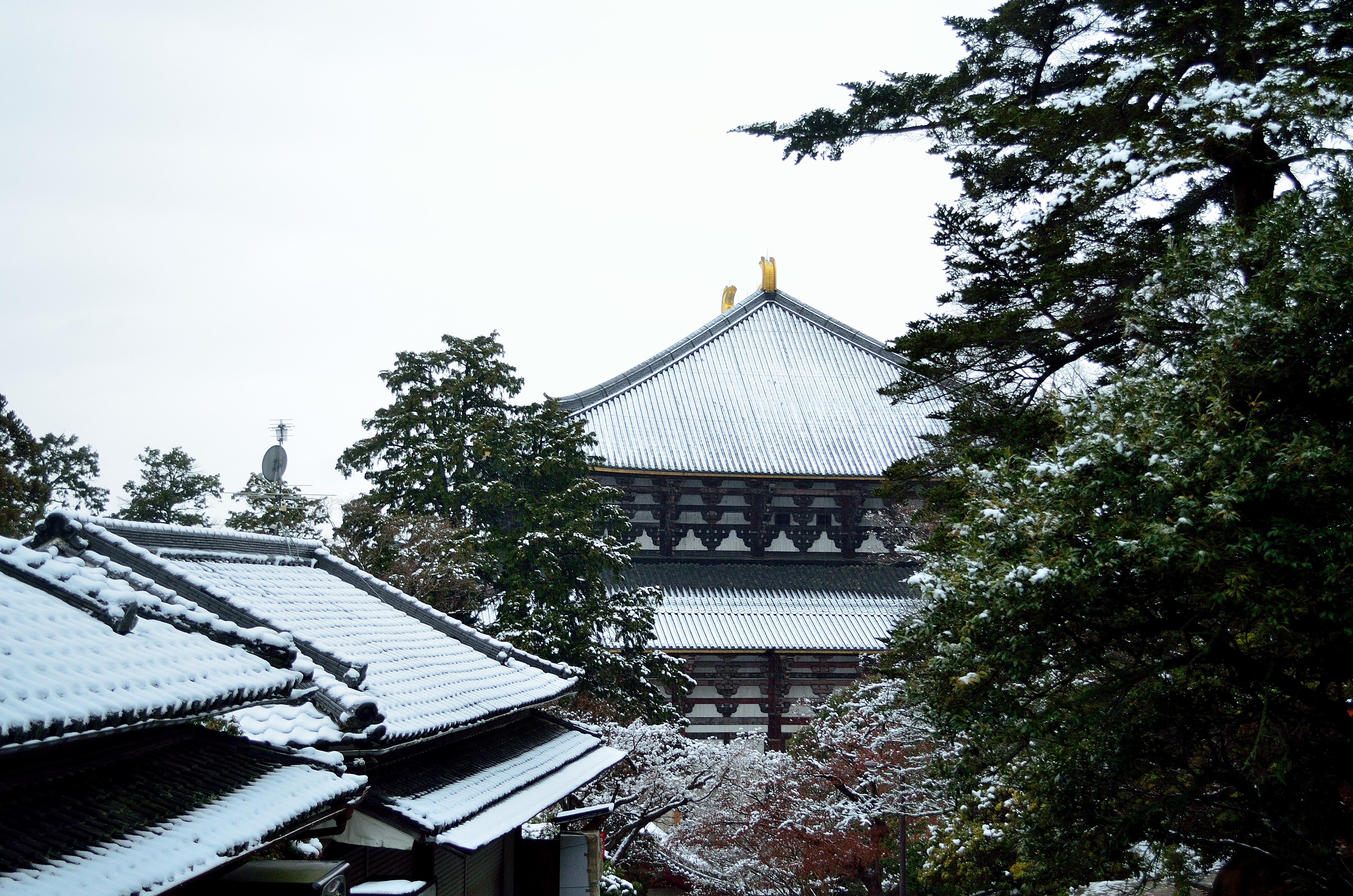 冬の東大寺大仏殿
