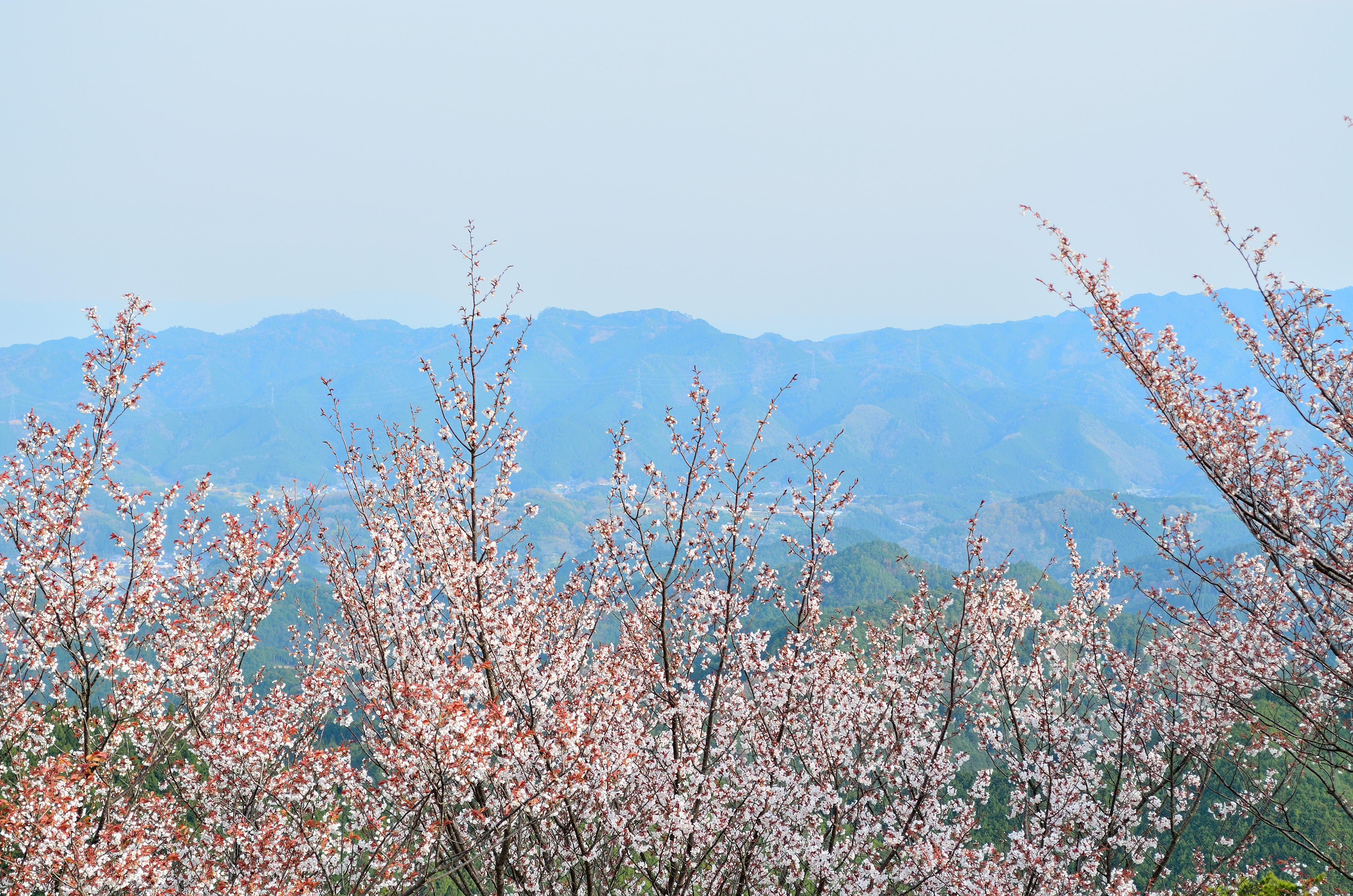 吉野山奥千本 高城山展望台からの眺望