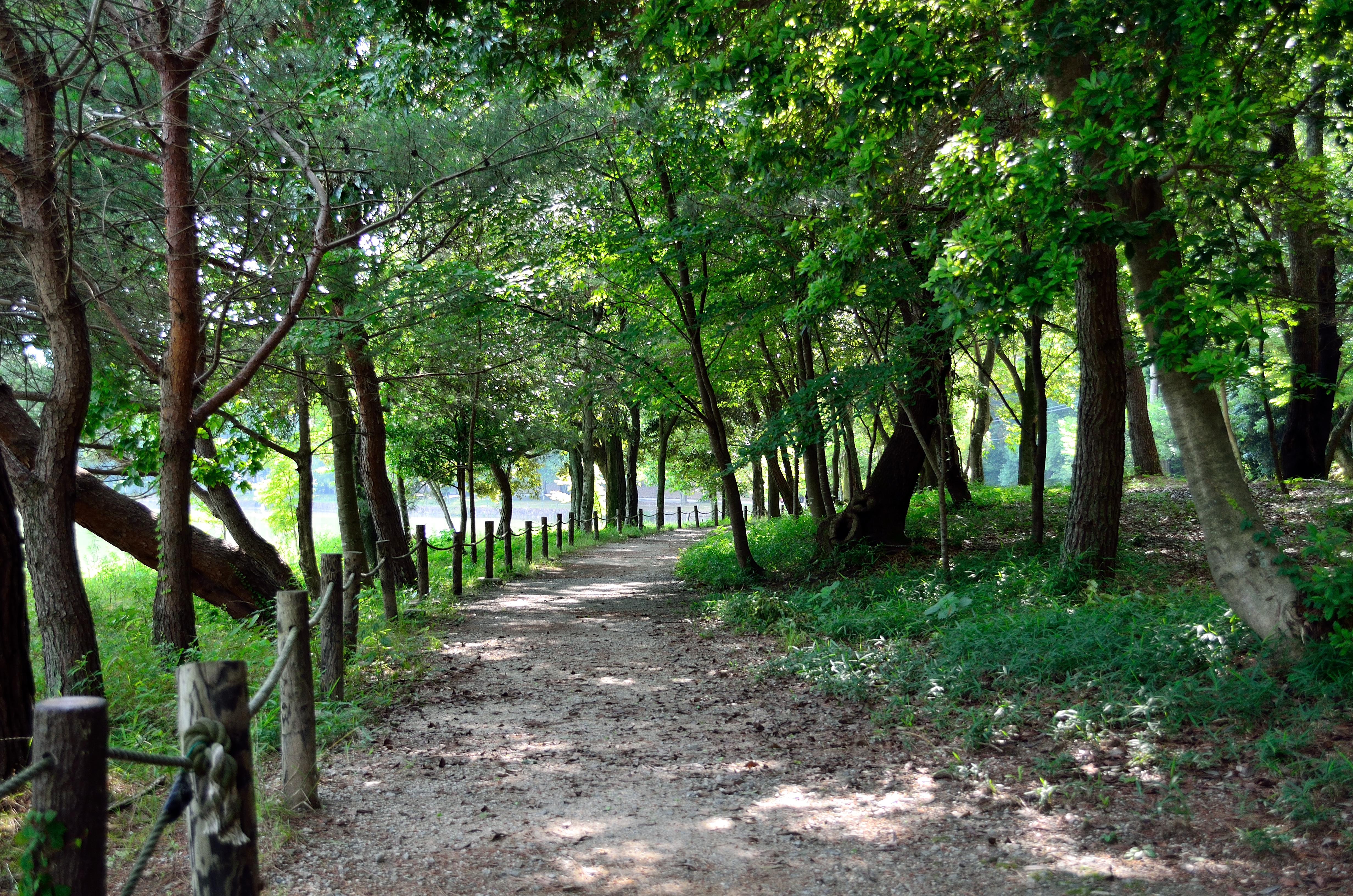 橿原神宮 深田池周辺遊歩道