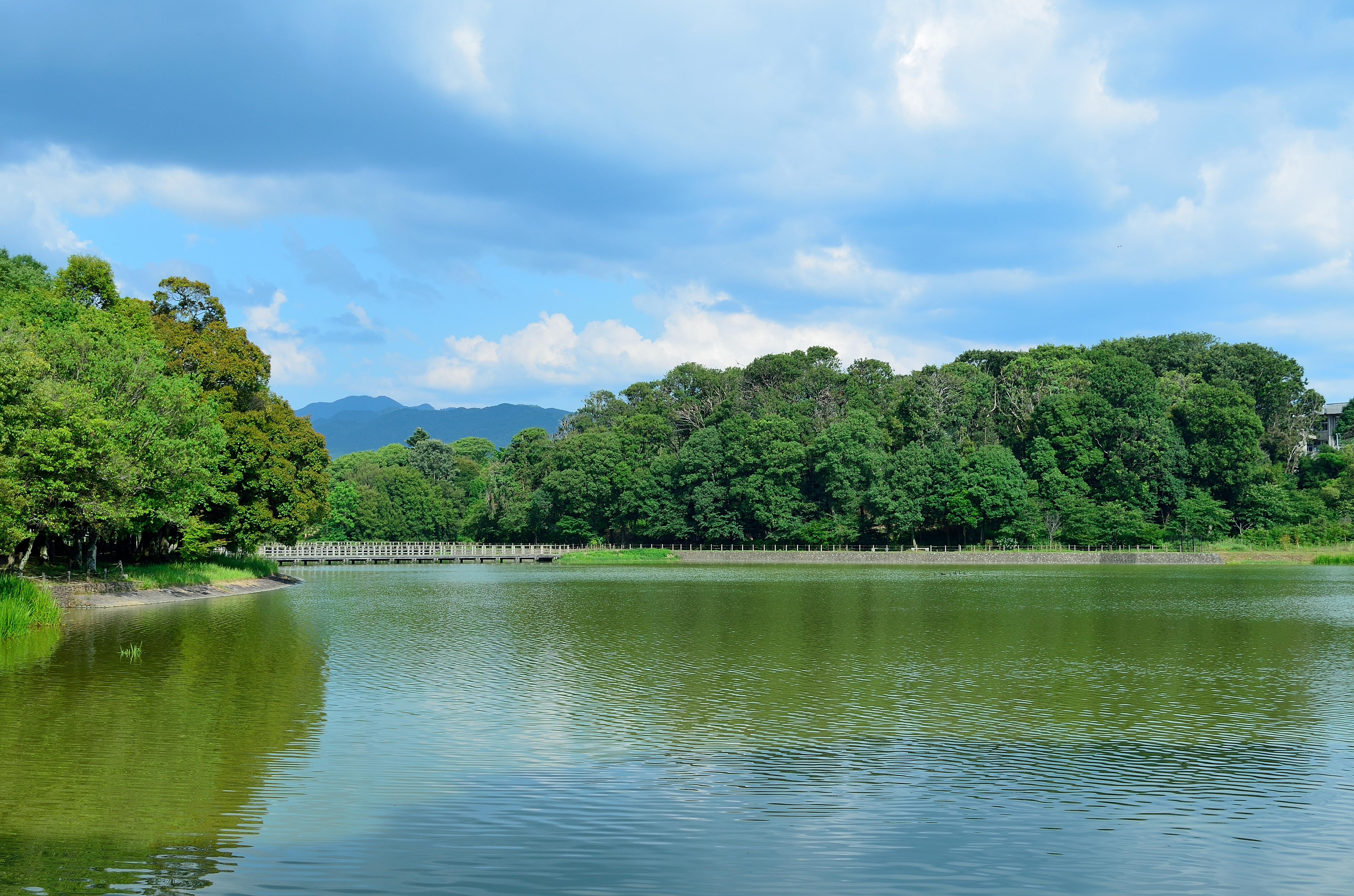 橿原神宮 深田池