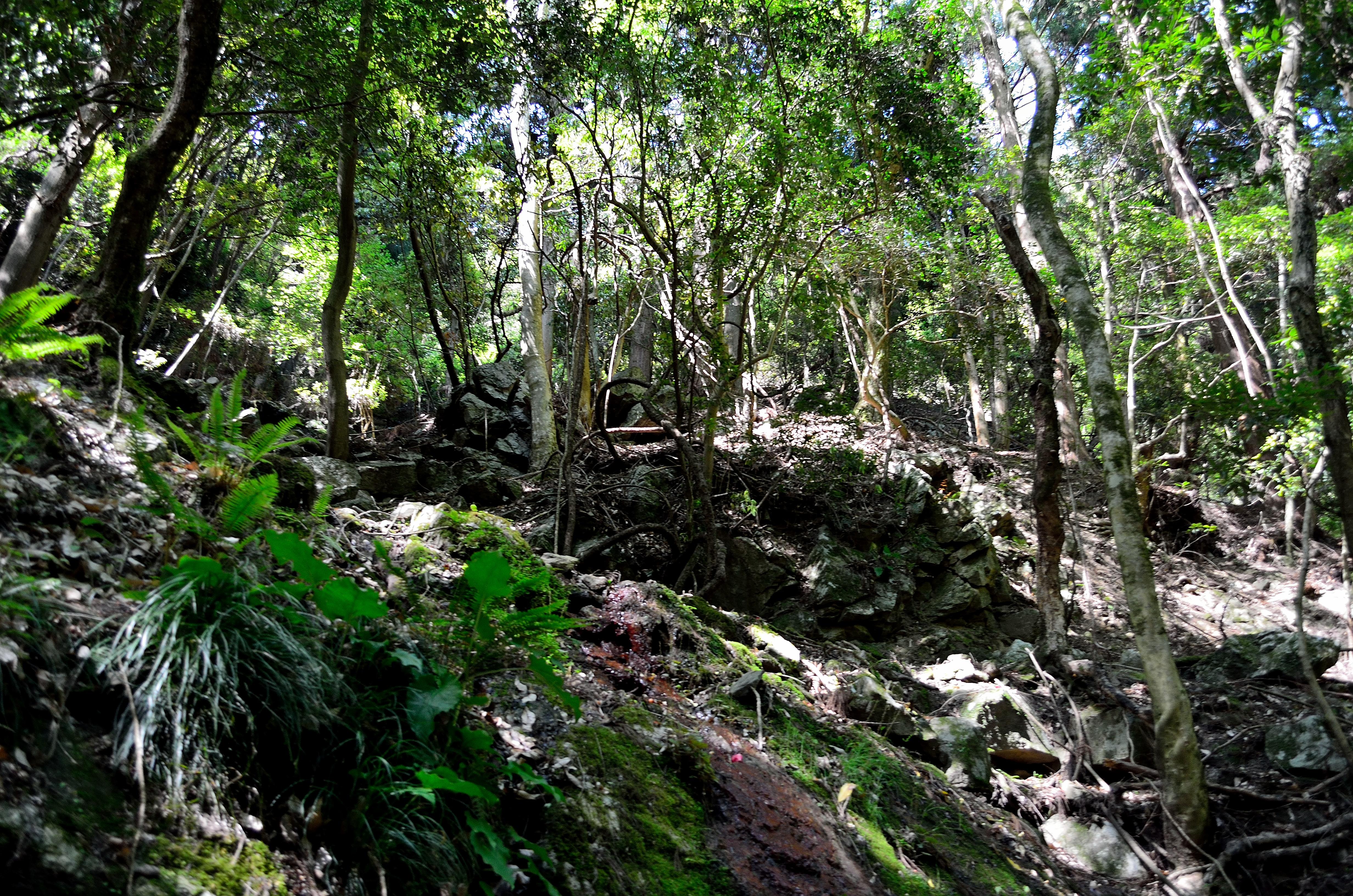 春日山原始林 陽の当たる斜面