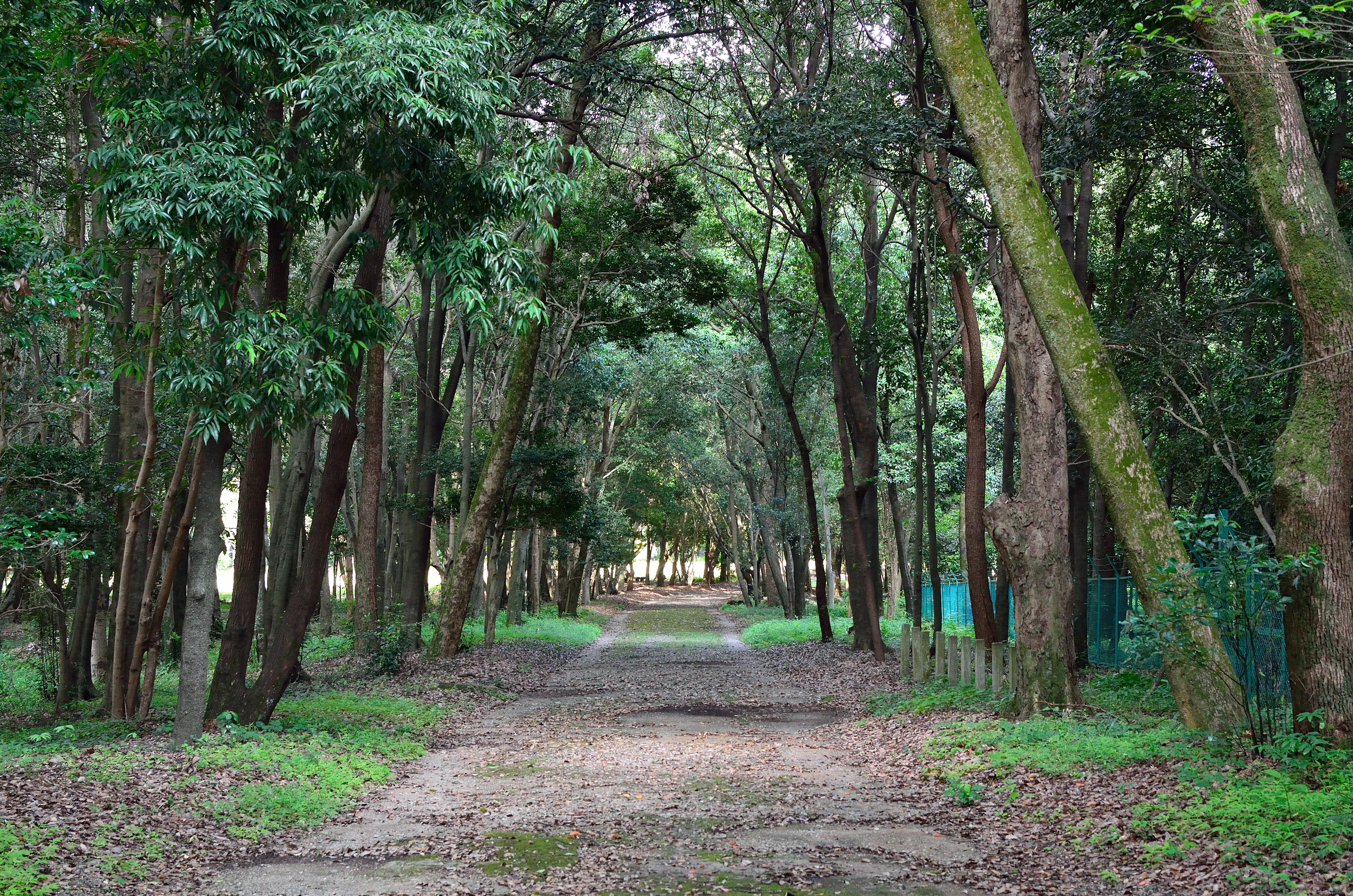 橿原神宮 森林遊苑周辺の散歩道