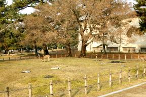 奈良国立博物館 春日東塔跡
